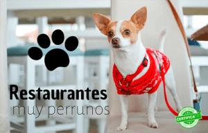 restaurantes para ir con perros