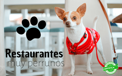 Restaurantes en Madrid a los que puedes ir con tu mascota